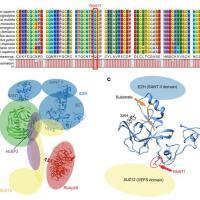 Identificata mutazione genetica nei tumori benigni associati all'ipertiroidismo
