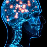Il cervello combatte le infezioni modulando la risposta infiammatoria