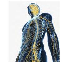 Neoplasie del Sistema Nervoso: una guida  per spiegare la malattia con le parole (semplici) dei pazienti