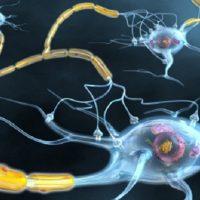 Sclerosi multipla: una possibile strada per riattivare le cellule immunitarie che controllano l'infiammazione