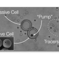 Create cellule artificiali che imitano la capacità delle cellule viventi di catturare, elaborare ed espellere materiale