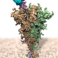 Effetti varianti COVID su interazione anticorpi monoclonali